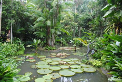 Пруд с кувшинками в тропическом лесу