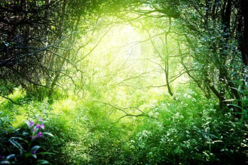 Солнце освещает цветущую поляну в лесу