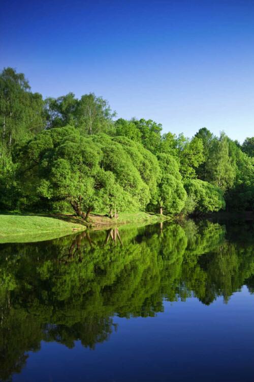 Зеленые деревья на берегу спокойной реки
